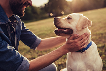 Civil dog law