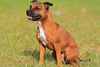Prohibited Types of Dog